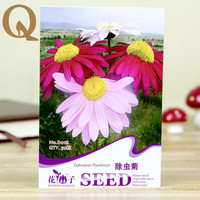 2017 sale! Pyrethrum seeds A Chinese herbal medicine seed a pack of 50 grain planting potted plant is suitable for the balcony