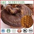 Natural Phellinus linteus Mushroom Extract 600g