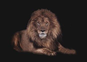 Фоны для фотосъемки с изображением животных льва и черного ребенка, высокое качество, компьютерная печать, фоны для фотосъемки новорожденн...