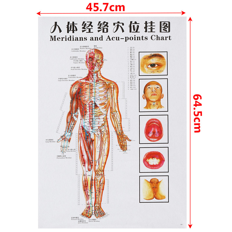 7pcsset Acupuncture Massage Point Map Chineseenglish Meridian
