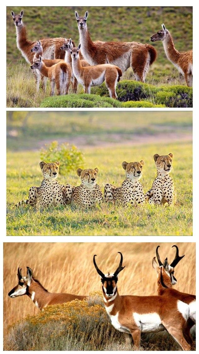 GPRS Hunting camera photo trap animals