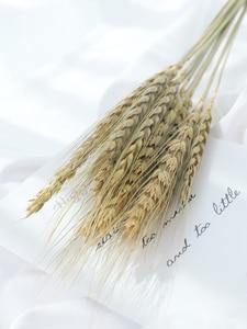 Image 5 - 天然大麦小麦耳 lampranthus ウサギ尻尾草写真撮影アクセサリー写真スタジオの小道具の背景背景飾り