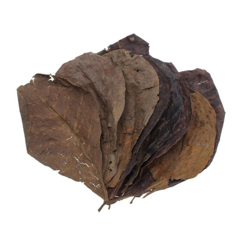 10pcs High Quality Natural Terminalia Catappa Leaves,Indian Almond Lour Tree Olive Leaf For Aquarium Water To Balance PH Acidity