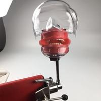 Зубные образования и исследование модели скамейке установлен простой phantom модели головы зубные симулятор Nissin манекен для стоматолога обра