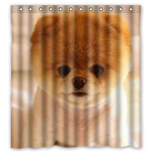 POOKOO!! Cute Pomeranian Dog Personalized Custom 66 x 72 Waterproof Polyester Fabric Shower Curtain