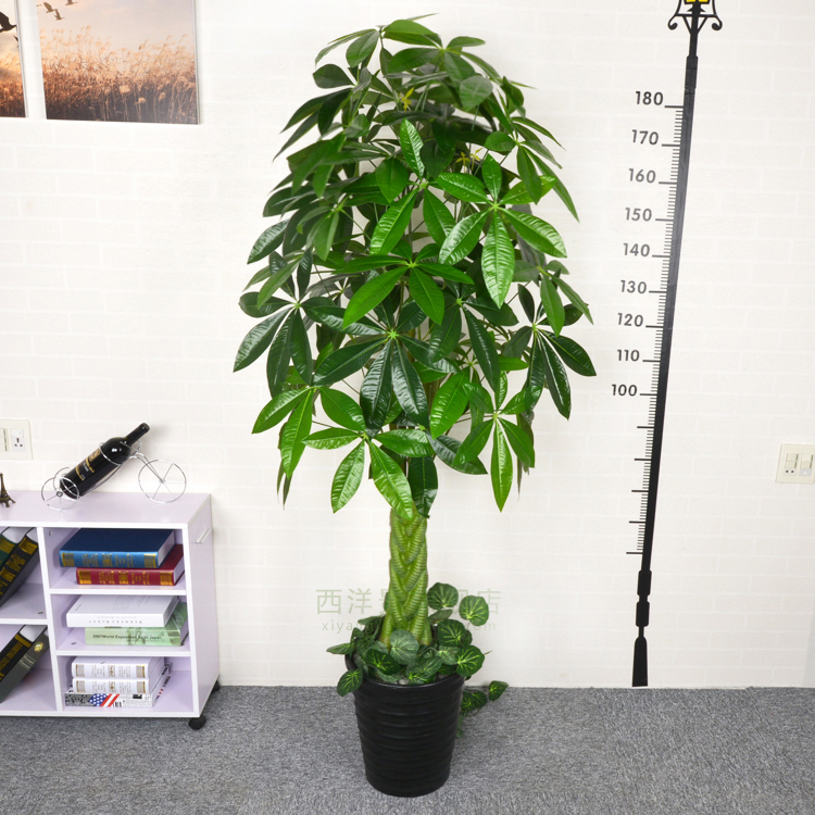Online kopen Wholesale grote plastic planten uit China grote ...