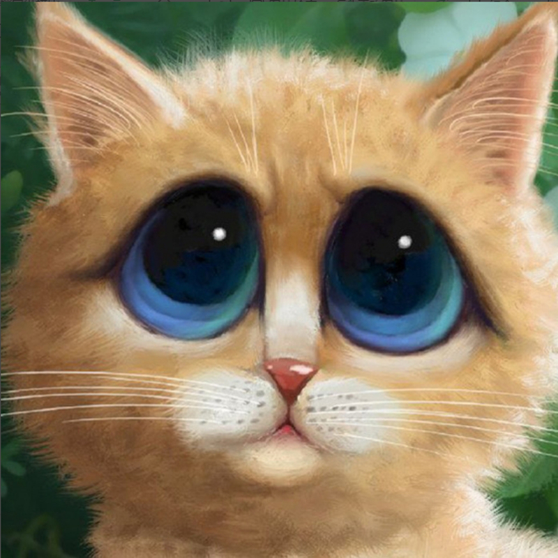 Картинки котика с большими глазами