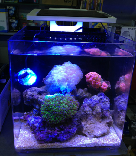 Sea marine coral SPS LPS reef fish tank LED Light mini nano clip ZET light Aquarium 25cm total 10W -in Lightings from Home u0026 Garden on Aliexpress.com ... : nano lighting - azcodes.com