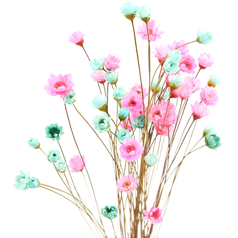 Image 5 - 90pcs / lot natural Brazilian mini daisy dry vase glass bottle decorative filling material home wedding decoration accessories-in Artificial & Dried Flowers from Home & Garden