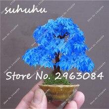 Große Förderung!!! Mini Bonsai Flamme Ahorn Samen Kanada, 5 Stücke eine packung, schöne baum Topf Kanadischen Flamme Bunte Maple Samen(China)