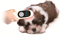 Pajisja e fabrikës LASTEK Pajisja me terapi me lazer të nivelit të ulët për shërimin e plagëve të kafshëve shtëpiake