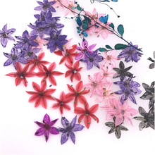 Popular dried star flowers buy cheap dried star flowers lots from small star shaped dried pressed small gifts for epoxy dried flowers phone case diy 120pcs free mightylinksfo