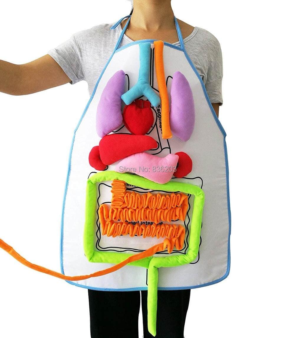 Tienda Online Humano Cuerpo músculos con órganos internos, modelo ...
