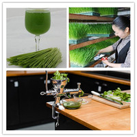 Manual Fruit Juicer Stainless Steel Fresh Cucumber Juice Machine Household Wheat Grass Juicing Machine ZF