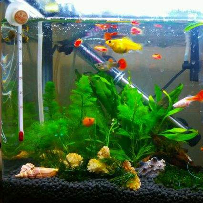 Fish aquarium for sale in pakistan - 3 Pcs Small Plastic Artificial Green Water Aquatic Grass Plant Fish Tank Aquarium Landscape Decoration Ornament