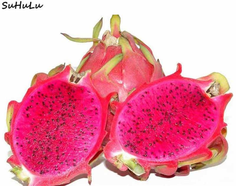 200 шт. японские Сладости питая семена бонсай фрукты антивозрастной не ГМО красный дракон фрукты, технология бонзаи для дома сад кактус дерево завод