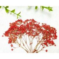 Мини красные звезды событие для вечеринок сухих цветов оптовая продажа Бесплатная доставка 1 лот/10 Сумки (120 шт.)