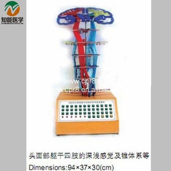 Merkezi Sinir Iletim Elektrikli Modeli BIX-A1080 MQ031Merkezi Sinir Iletim Elektrikli Modeli BIX-A1080 MQ031