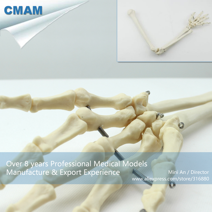 12358 CMAM-JOINT11 Life Size Human Shoulder Skeleton Upper Arm Model,  Medical Science Educational Teaching Anatomical Models 1 2 life size knee joint anatomical model skeleton human medical anatomy for medical science teaching