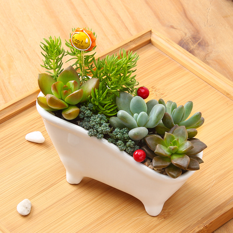 Elegant Succulents Combination Of Indoor Plants Potted Flowers Office Desktop  Radiation Fleshy Flowers Bonsai Plantsin Christmas From Home U0026 Garden On