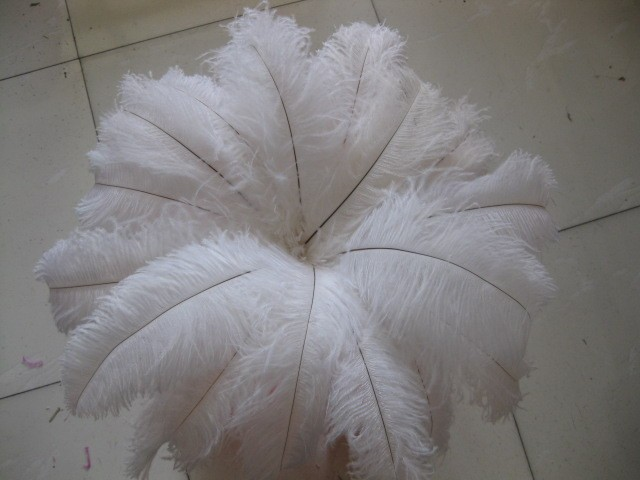 wholesale 50pcs  14-16inch/35-40CM High Quality Natural OSTRICH FEATHERS white Color freeshipping