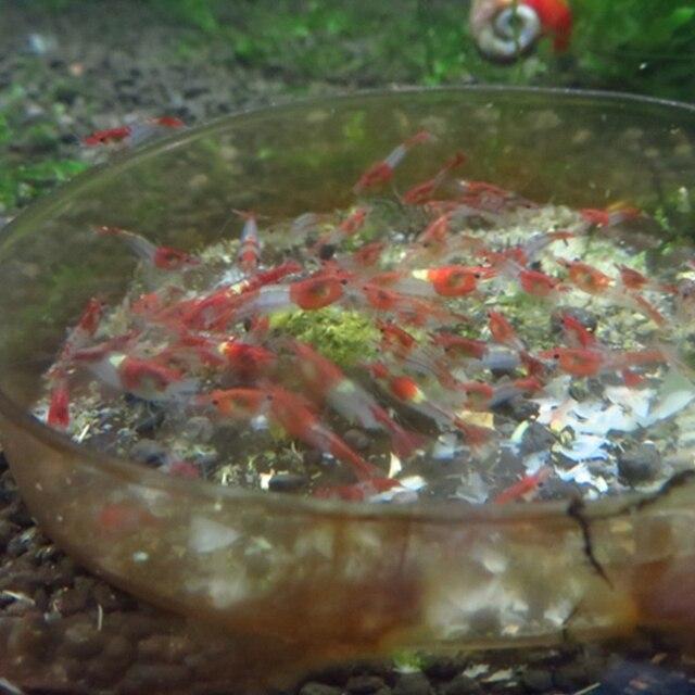 35g Natural Aquarium Crystal Red Shrimp Spinach Bar Food  6