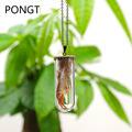 2016 New Arriva real Feather Necklace amulet glass bottle Pendant wildlife feather Pendant Necklace Vintage Women Rope Chain