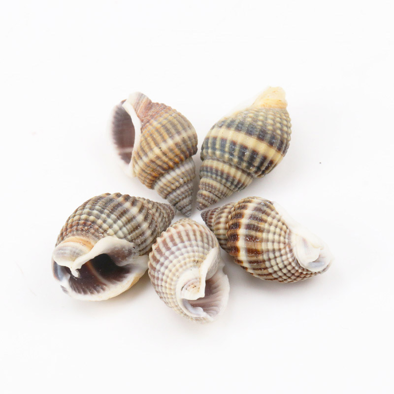 10pcs 20-35mm Natural Spot Spiral Shell SeaShells Zeeschelp For DIY Handmade Home Decoration Jewelry Making Scrapbooking Craft