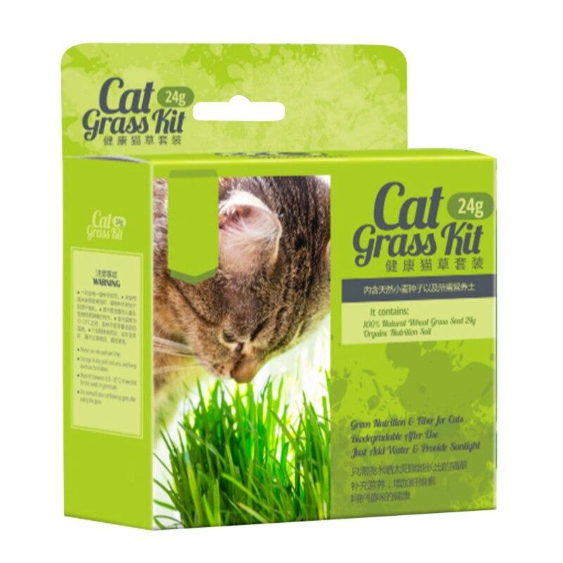 Cat Grass Plant Herb Edible Lemongrass Organic Cats grass ...