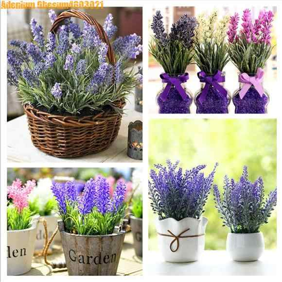 Sale! 100pcs lavender bonsai imported vanilla beautiful lavender flowers balcony  plant home garden decoration free shipping