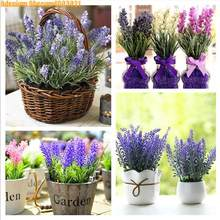 Sale! 100pcs lavender bonsai imported vanilla beautiful lavender flowers balcony plant home garden decoration free shipping(China)