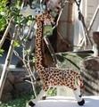 Holiday sale 1 pc 35cm anime creative Madagascar giraffe decoration plush doll cute stuffed toy children wedding birthday gift