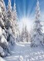 150x210 cm Nieve aficionado escena fotografía telones estudio fotográfico vinyle achtergronden voor fotostudio fondo fotografía 9499