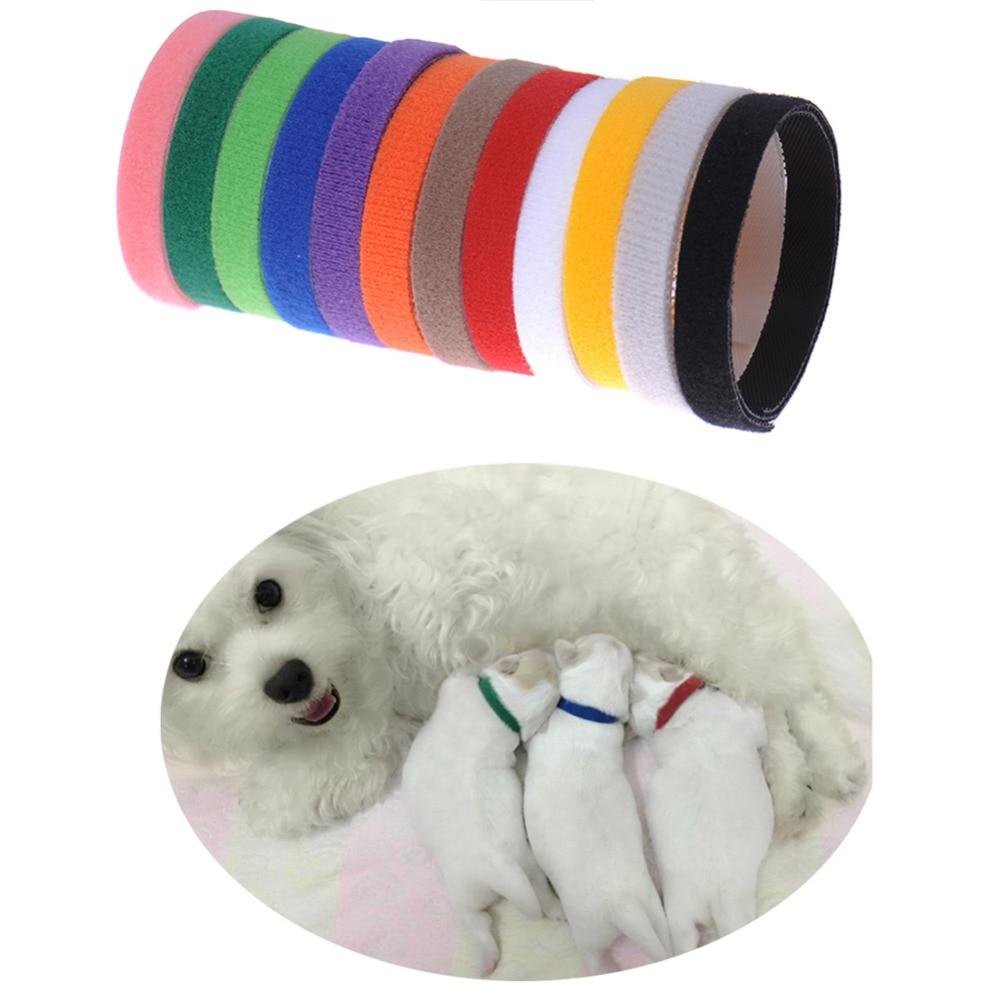 12pcs כלבלב זיהוי זיהוי צווארונים מתכוונן ניילון חתול קטן כלב חתלתול Multicolor צווארון הכלב אביזרים לחיות מחמד
