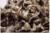Extracto 100g Semillas De Moringa, orgánica moringa hierba saludable, origen de real de La India