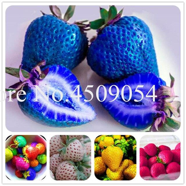 Bonsái 200 unids japonés azul fresa baya dulce fruta Interior Exterior planta fresa jardín Multi-Color para elegir