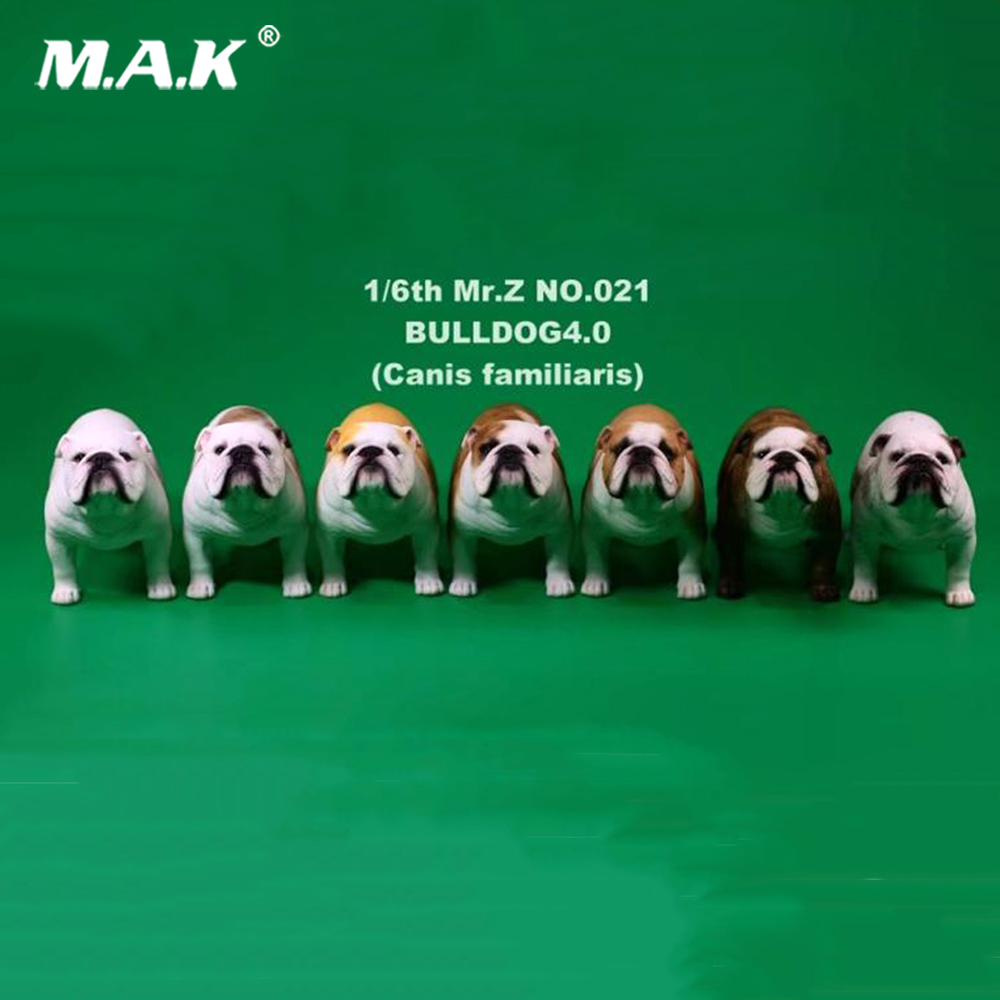купить 2 pcs/set Mr.Z 1/6 YD006 English Pet Dog Bulldog 4.0 Canis Familiaris Dogs Model Toys по цене 4846.53 рублей