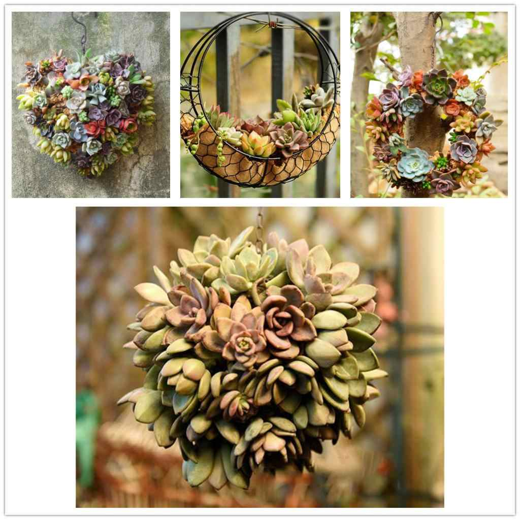 26cm MagiDeal Iron Wire Wreath Frame Succulent Pot Metal Hanging Planter Plant Holder-Home/Cafe/Wedding/Party Decor Geart Gift
