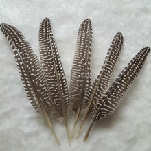 Guinea fowl wing feathers,natural black brown polka dot loose feathers quills for millinery,crafts 10-20CM 50pcs/lot