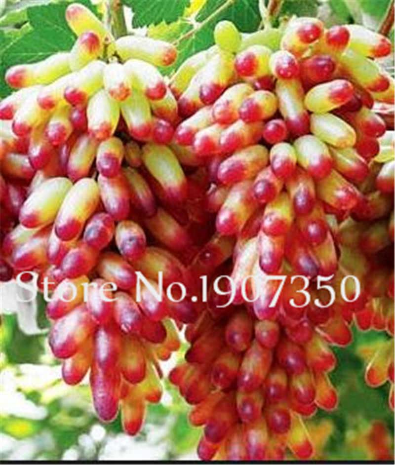 Hot Bán! 100 cái Hơn Hạt Mùa Hè Màu Đen Nho bonsai Tiên Tiến Trái Cây flores Tăng Trưởng Tự Nhiên Nho Làm Vườn bonsais planta