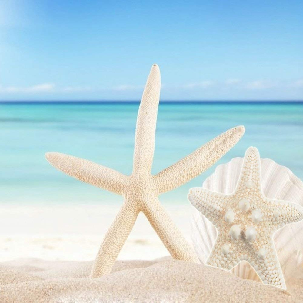 2pc Starfish Ocean Beach Starfish For Wedding Decor Beach Theme Party, Home Decorations,DIY Crafts, Fish Tank