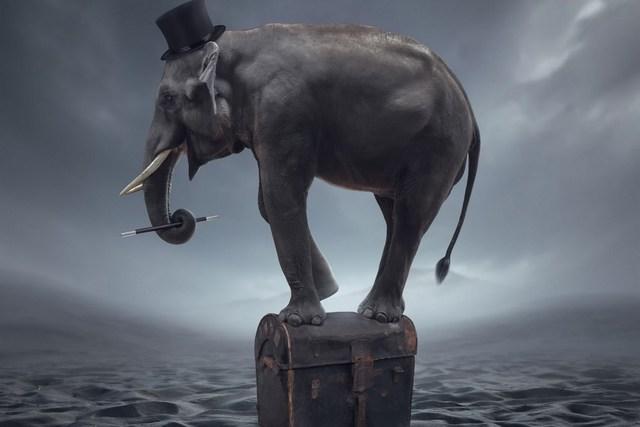 magicien lphant mer art fantastique salon accueil art dcor bois cadre tissu affiche accepter personnalisation - Cadre Elephant