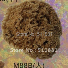 5'' Large NATURAL sea grass sponge for wall painting FREE shipping   125mm art grass sea sponge
