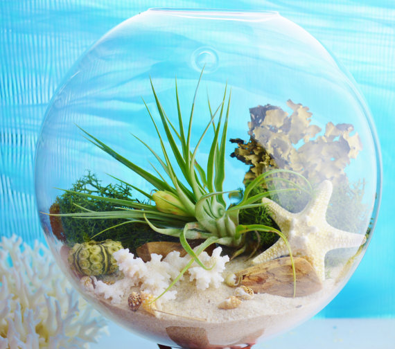 Glass Wall Hanging Terrarium Bubble With Plant And Moss Wall Fish