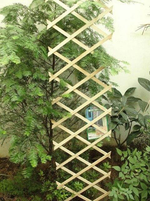 Casa y jardín bonsai macetas de madera carbonizada que se extiende ...