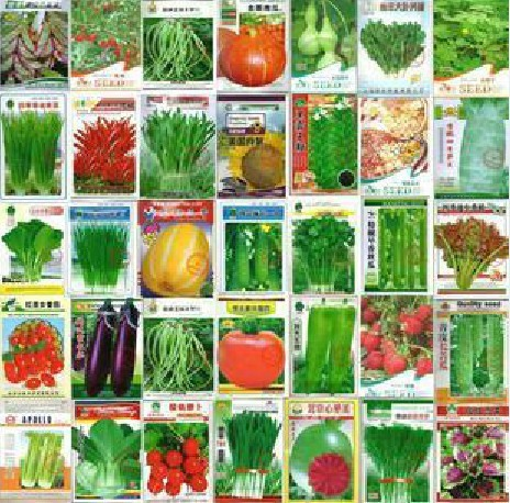 100pcs Vegetable seeds wholesale and different vegetable seed family potted balcony garden four seasons pl