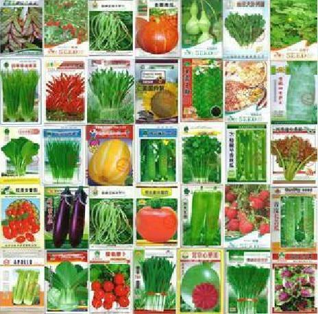 Vegetable Garden Seeds webzineco