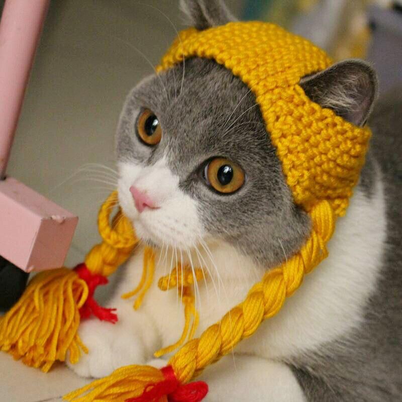 горка шапки с кошками картинки теперь
