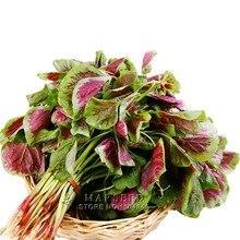 Marseed Non Hybrid 500 Red Amaranth Vegetable Seeds Backyard Garden