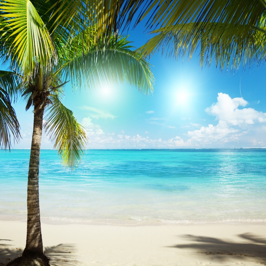 Palm Tree Beach: Laeacco Summer Sunny Seaside Beach Palm Trees Scene